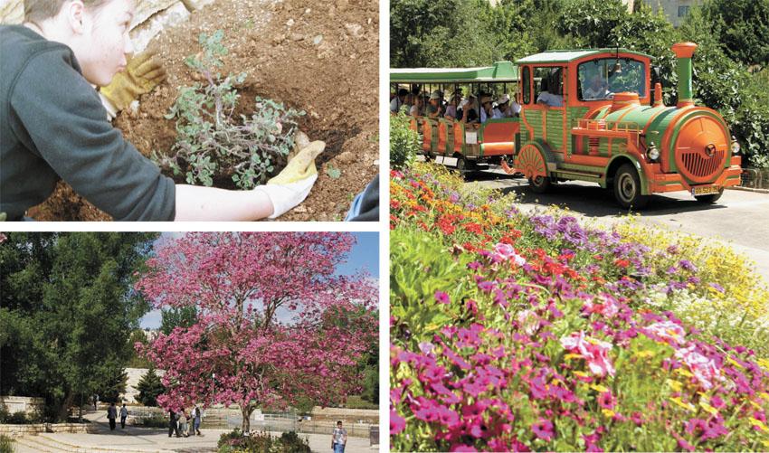 """חודש קיימות בגן הבוטני בירושלים (צילומים: ג'ודית מרכוס, יח""""צ)"""