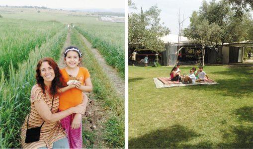 חוות הזיתים אלאדין (צילומים: רימון ארצי)