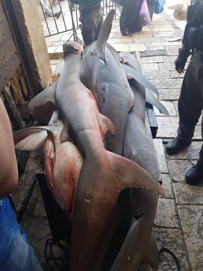 כרישים בעיר העתיקה (צילום: דוברות המשטרה)