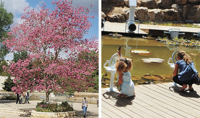 """הגן הבוטני (צילומים: יח""""צ, ג'ודית מרכוס)"""