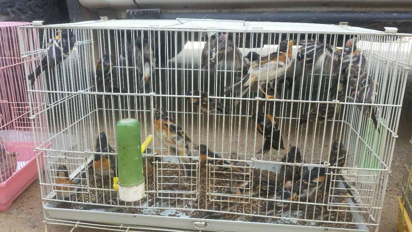 חלק מהציפורים שנמצאו בביתו של התושב (צילום: אריאל קדם רשות הטבע והגנים)