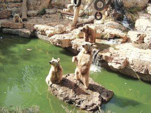"""גן החיות התנ""""כי (צילום: avishai teicher)"""