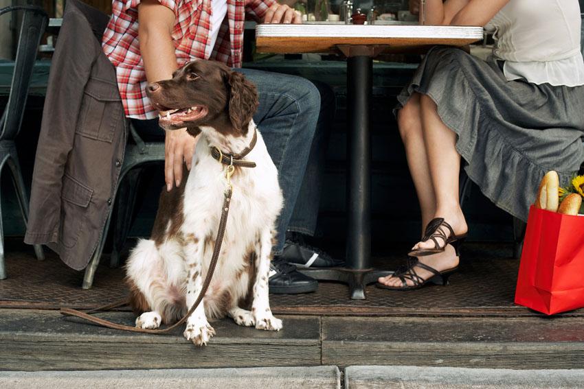 האם המסעדות הירושלמיות מכניסות כלבים?