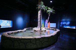 """האקווריום החדש בגן החיות התנ""""כי (צילום: ארנון בוסאני)"""