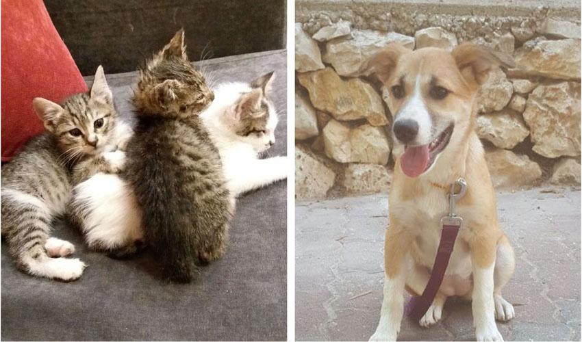 (צילומים: באדיבות ירושלים אוהבת חיות)
