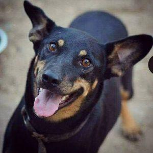 כלב (צילום: באדיבות עמותת ירושלים אוהבת חיות)