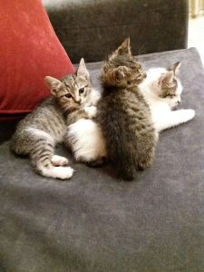 חתולים (צילום: באדיבות עמותת ירושלים אוהבת חיות)
