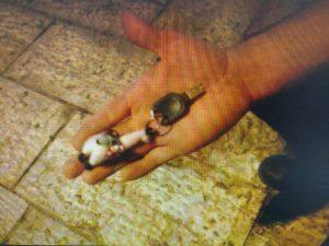 המפתחות שבעזרתם לפי החשד הצעיר פרץ לצ'יינג' (צילום: דוברות המשטרה)