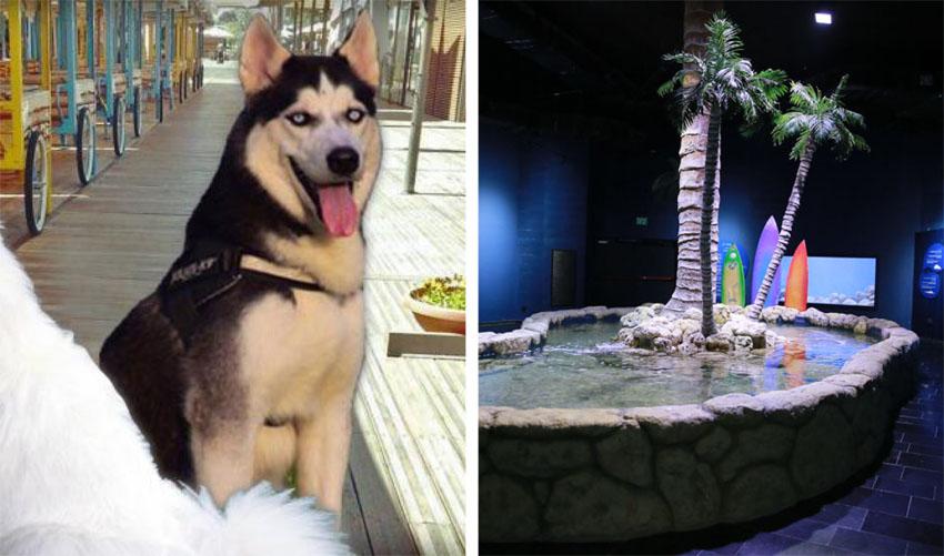 """אקווריום בגן החיות התנכי, תערוכת כלבים בתחנה (ארנון בוסאני, יח""""צ)"""
