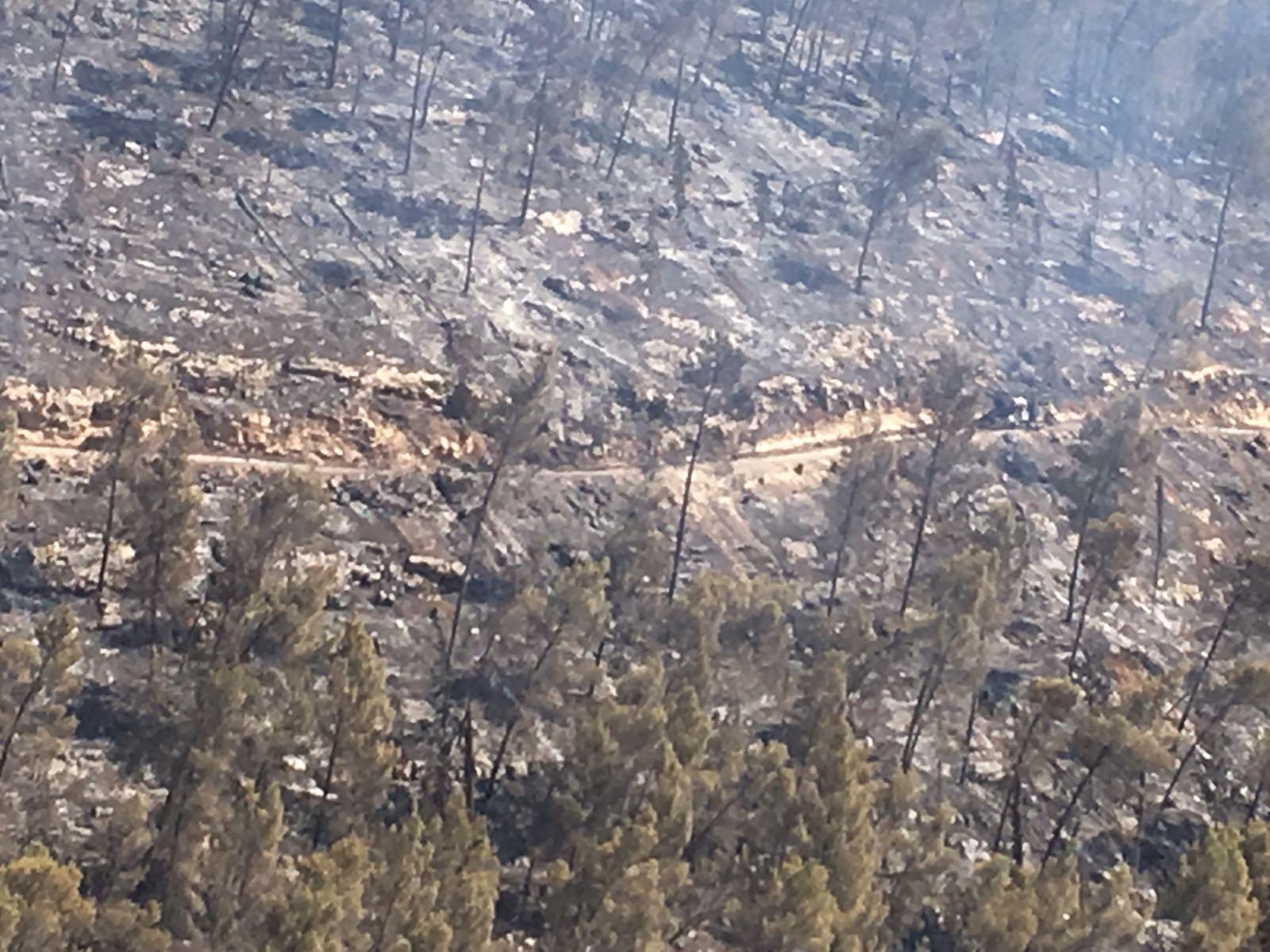 שריפה בסטף (צילום: כבאות והצלה)