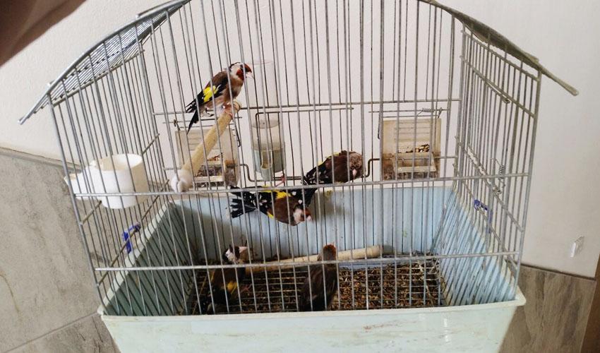 כלוב חוחיות שנמצא בבית החשוד בירושלים (צילום פקחי רשות הטבע והגנים מחוז מרכז)