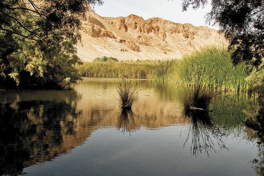 שמורת טבע עינות צוקים (צילום: דורון ניסים)