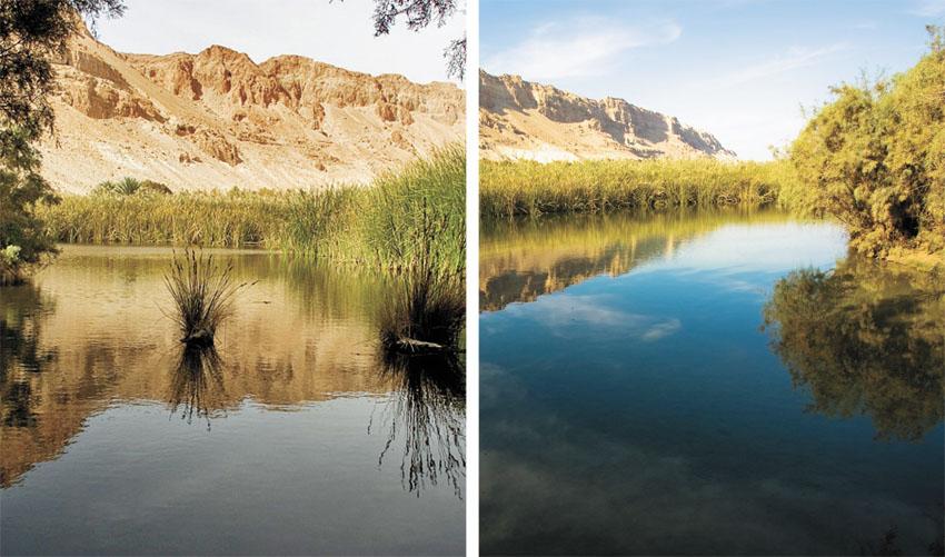 שמורת טבע עינות צוקים (צילומים: דורון ניסים)