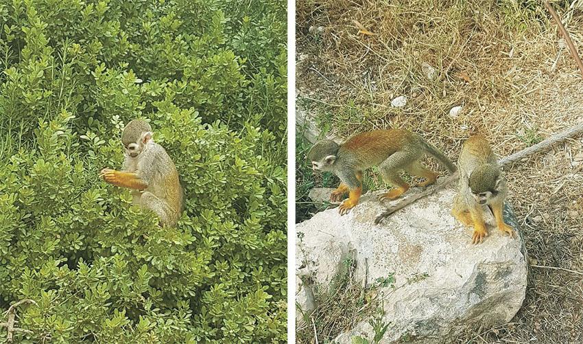 פארק הקופים (צילומים: שרה דיבנק)