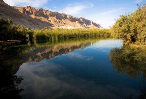 שמורת הטבע עיינות צוקים (צילום: רשות הטבע והגנים)