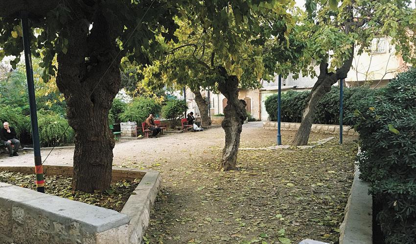גן התות (צילום: טל כץ)
