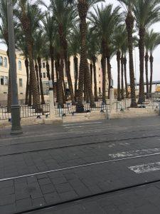 עצי הדקל בכיכר ספרא