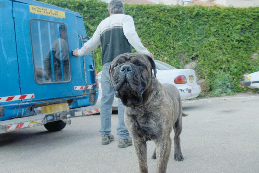 כלבת כלב בהסגר (צילום: ירון קמינסקי)