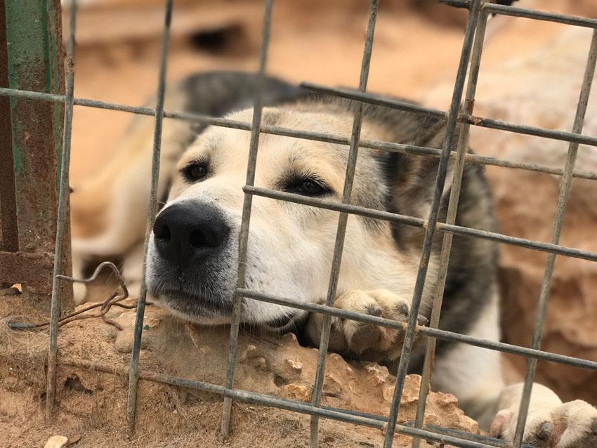 צער בעלי חיים (צילום: נועם קליין)