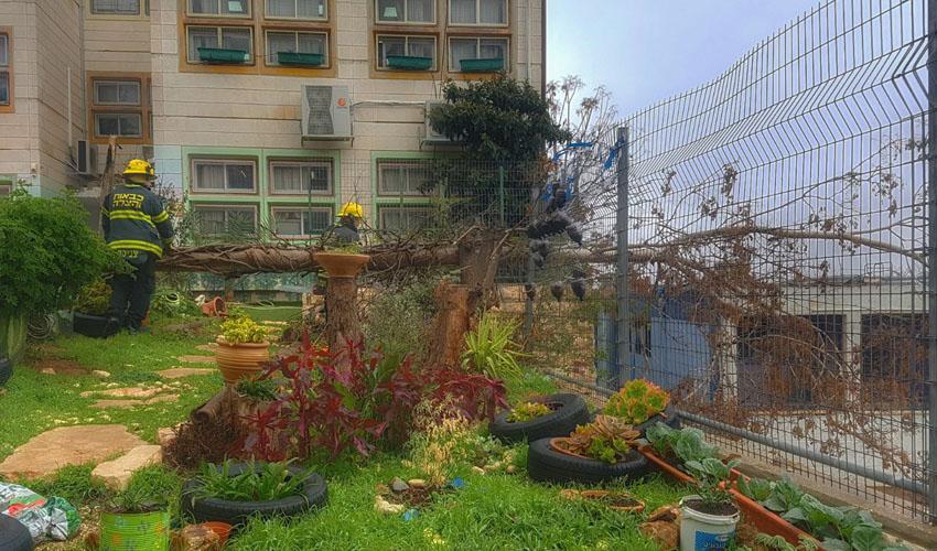 """העץ שקרס על גדר בית הספר תל""""י גילה (צילום: אריק אבולוף-כבאות והצלה ירושלים)"""