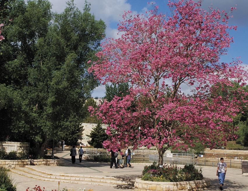 הגן הבוטני (צילום: ג'ודית מרכוס)