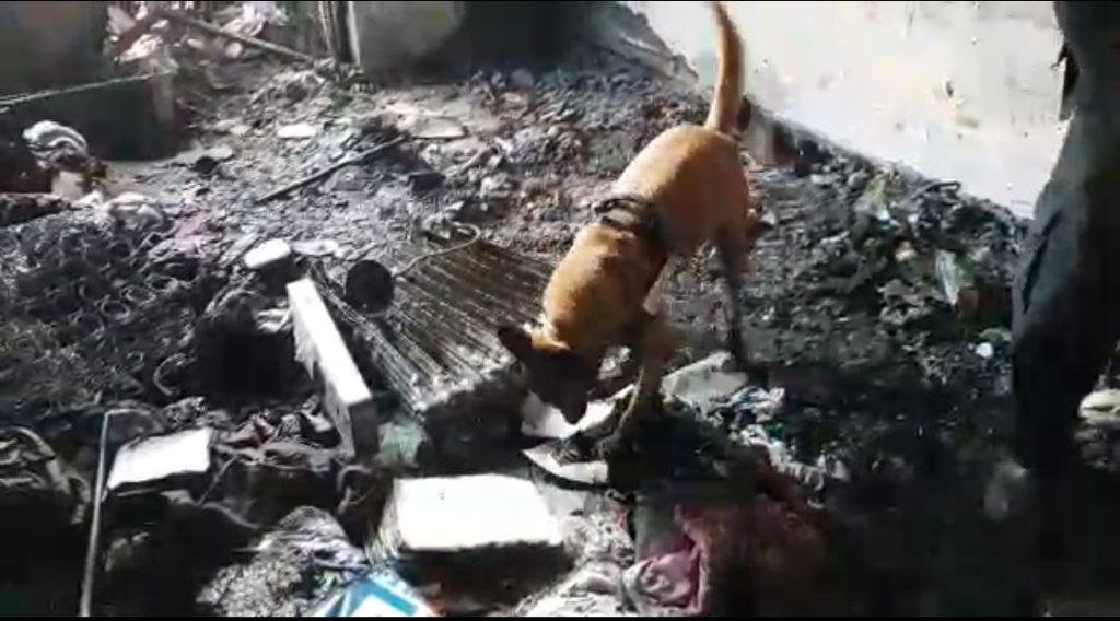השריפה בדירה בבית וגן, פרצה בגלל רדיאטור - בתמונה כלב מרחרח את הרדיאטור בדירה המפויחת (צילום: דוברות כבאות והצלה מחוז ירושלים)