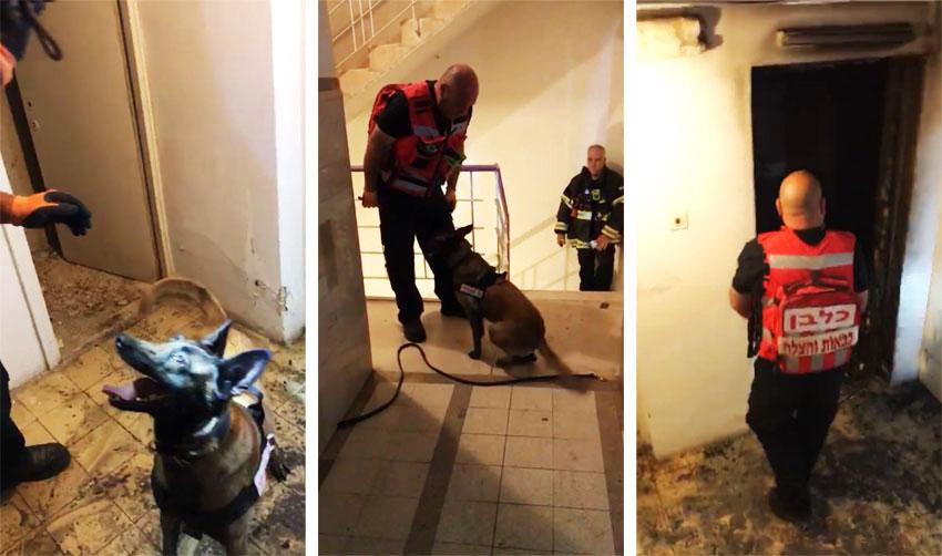 זירת השריפה בבית הכרם (צילומים: דוברות כבאות והצלה ירושלים)