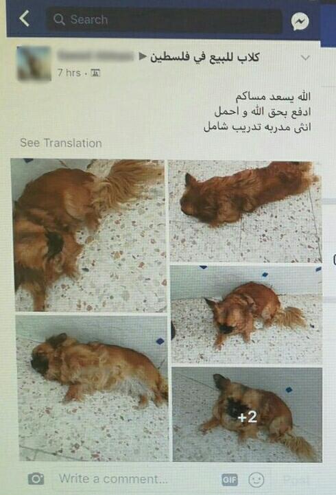 הפוסט בפייסבוק שמציע את מכירת הכלבה צ'יקה (צילום: דוברות המשטרה)