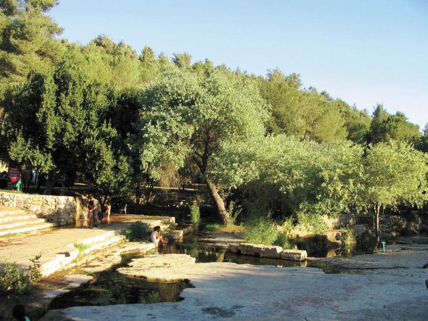 גן לאומי עין חמד (צילום: יוני שילה)