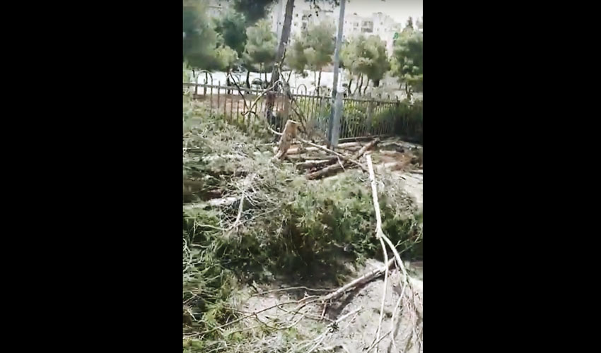כריתת עצים (צילום: עיריית ירושלים)