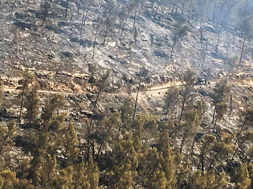 שריפת הענק בסטף בשנה שעברה (צילום: דוברות כבאות והצלה ירושלים)