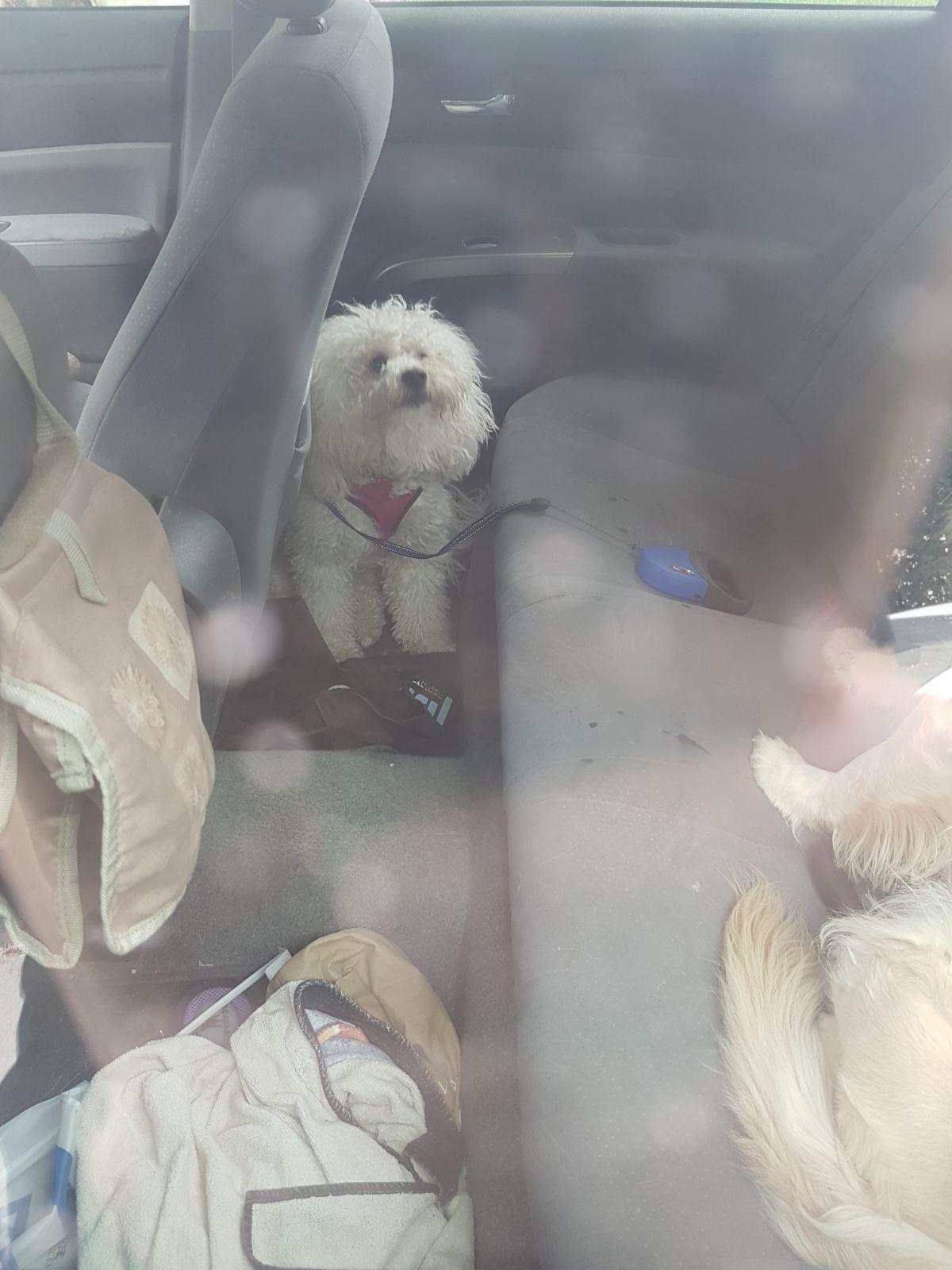 אחד הכלבים ברכב הלוהט (צילום: דוברות כבאות והצלה ירושלים)