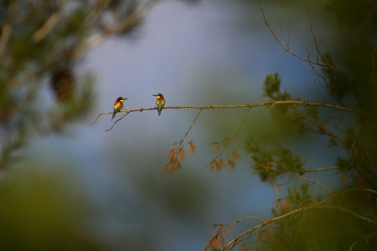 זוג שרקרקים בהר הרצל (צילום: ארז עמיר)