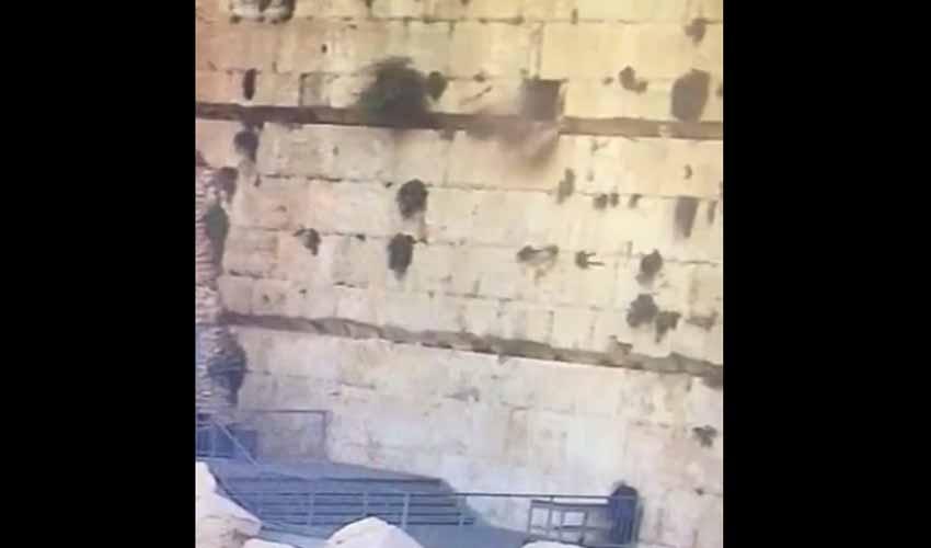 נפילת האבן ברחבת הכותל המערבי (מתוך הסרטון)