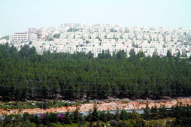 רמת שלמה (צילום: אמיל סלמן)