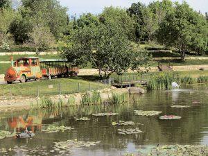 הגן הבוטני (צילום: יעל כהן)