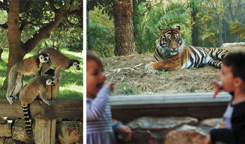 """מתוך גן החיות התנ""""כי בירושלים (צילום: צוריאל פנש, איתי בלסון)"""