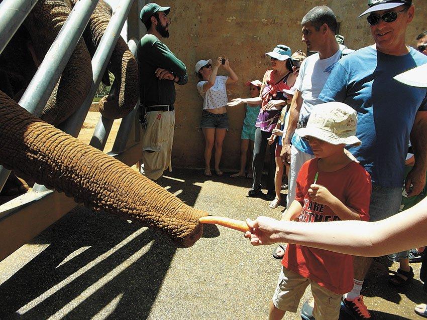 משפחת קליין מבלה בגן החיות (צילום: סיגל קליין)