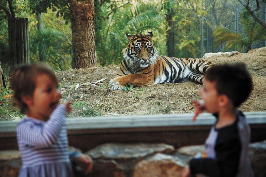 """מתוך גן החיות התנ""""כי בירושלים (צילום: איתי בלסון)"""