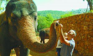 """פיל בגן החיות התנ""""כי (צילום: עומר הרפז)"""