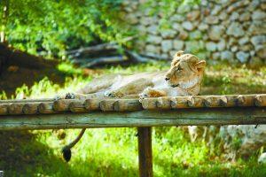 """גן החיות התנ""""כי (צילום: איתי בלסון)"""