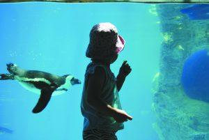 """האקווריום בגן החיות התנ""""כי (צילום: מריה מיטלמן)"""