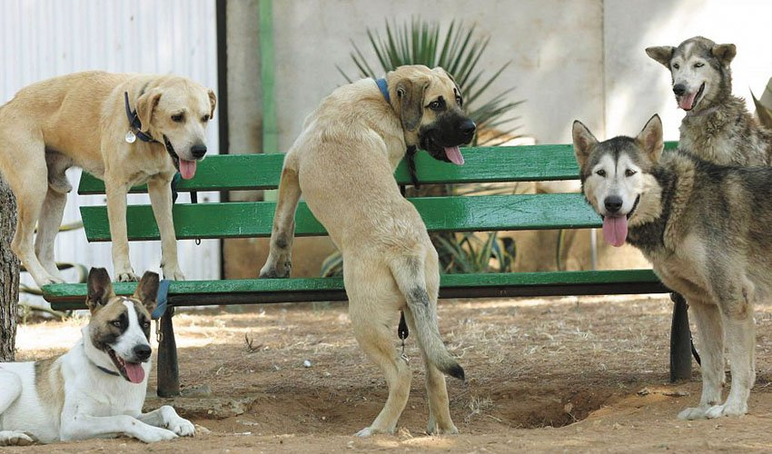 גינת כלבים (צילום: דודו בכר)
