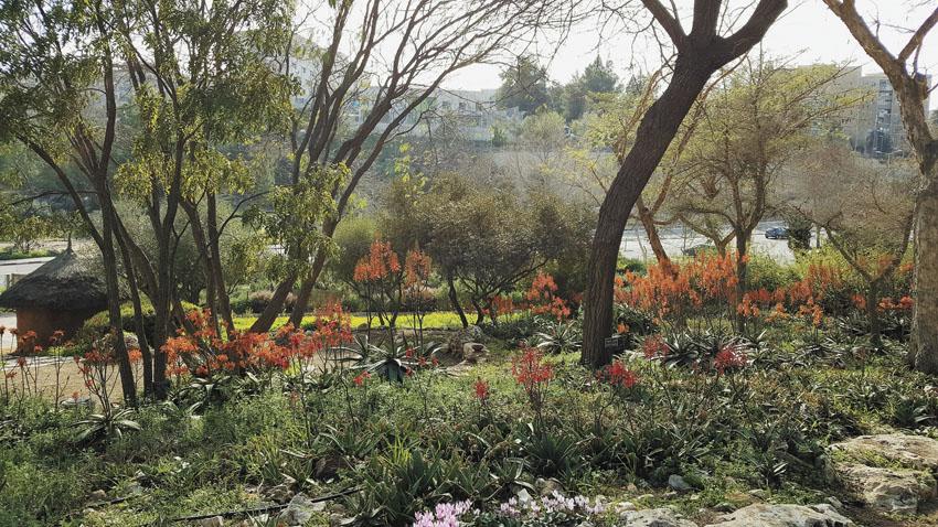 פריחה בגן הבוטני (צילום: צביה אדלר)