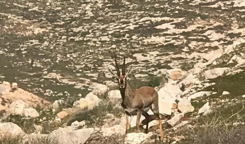 פנינת הטבע בפסגת זאב (צילום: איציק נוריאל)