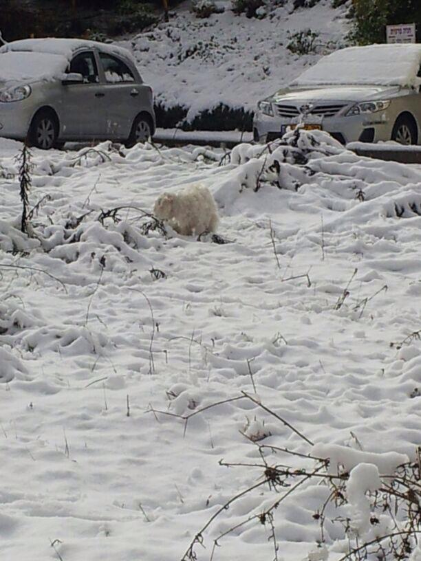 שלג - הציור השבועי לילד - איפה רקסי? (צילום: מיכל פישמן-רואה)