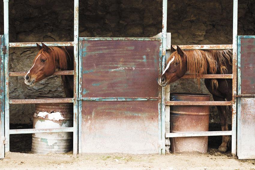 חוות סוסים יהודה עלפי (צילום: אסף קרלה)