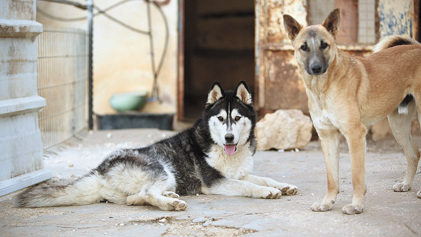 כלבים לאימוץ בירושלים (צילום: אדוארד ביילי)
