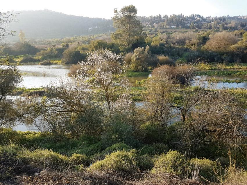אגם בית זית (צילום: דנית קרסגי)