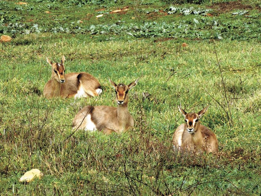 עמק הצבאים (צילום: דב גרינבלט, החברה להגנת הטבע)